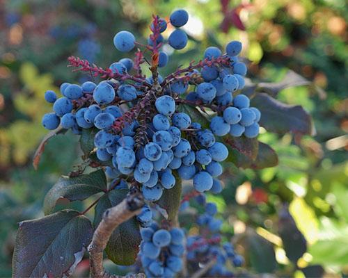 Brejoin Paysagiste Berries 204936 960 720